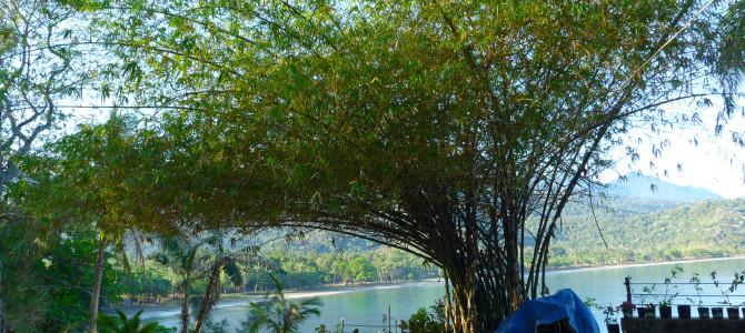 Nový web – Dovolená na Filipínách