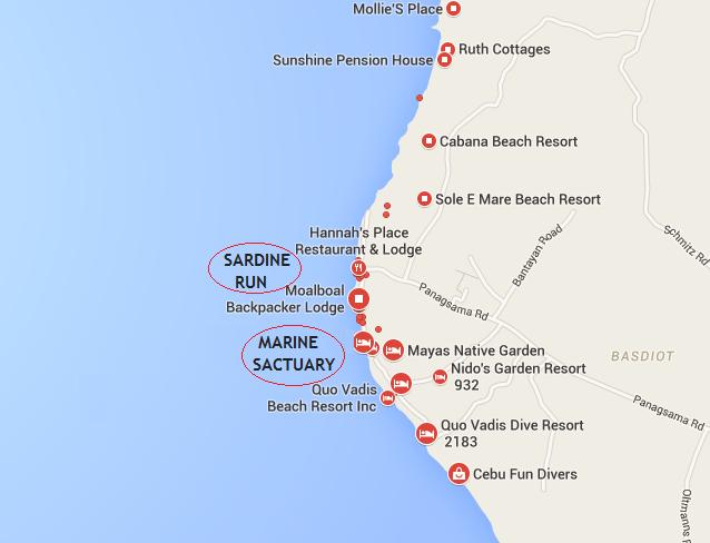 Kde nejlíp šnorchlovat a kde je Sardine run