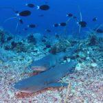 7 nejlepších míst k potápění na Filipínách